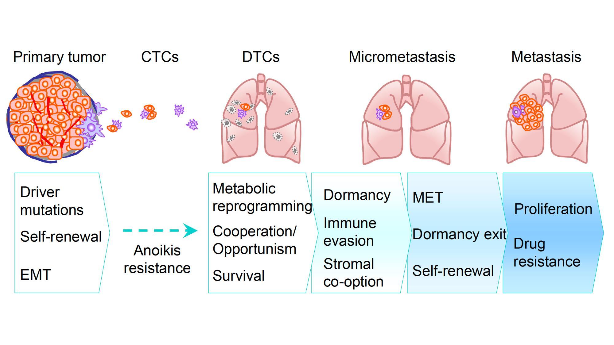 metastasis proces