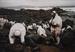 Anomalies cromosòmiques en mariners participants en les tasques de neteja del vessament de petroli del Prestige