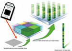 Use of microarrays in cytogenetics research: Free educational workshop